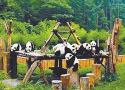 川陝甘合建 大貓熊國家公園