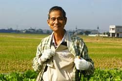 種「稻」老學到老 酸菜爺爺好熱銷