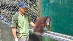人猿寶寶不認路 保育員教回家