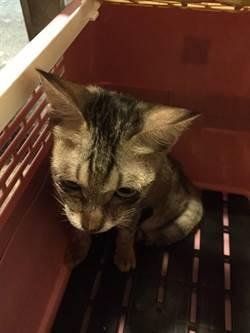 小貓掉進萬華分局排風洞 分局長下令拆管救貓