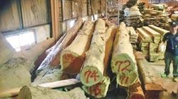 10年來最大宗! 高雄破獲盜採53噸牛樟木 山老鼠集團共28人被逮