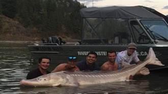 加國男子捕捉巨大鱘魚 竟出現奇特「豬鼻」