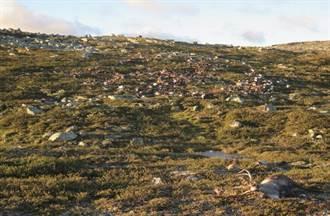 挪威雷神發威 劈死300多頭馴鹿
