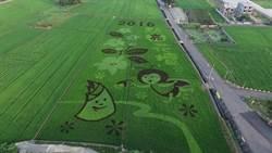 三春老樹新亮點 花壇彩繪稻田壯觀