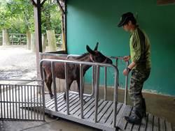動物不愛量體重  保育員出招