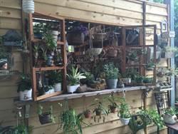 新店秘密花園「安康花市」 傳遞愛植物的心