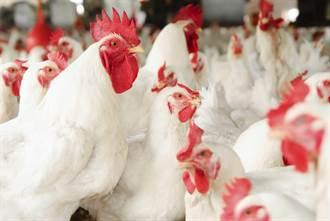 從海德堡沙門氏菌  看雞肉的麻煩事