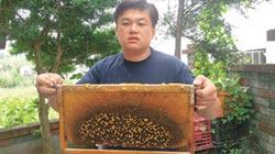 蜂群感染大陸移入病毒 野蜜恐減產9成5