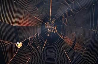 超級透鏡 蜘蛛絲可助常規光學顯微鏡提升2至3倍分辨率