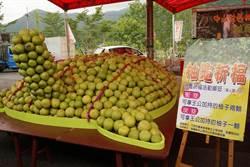 冬山柚子節 7000柚子堆成「大柚龜」亮相