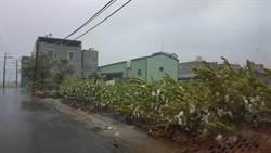 莫蘭蒂強風吹襲 高雄棗子、芭樂受損嚴重