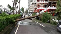 颱風夜溜出門 夜校生撞樹死亡