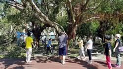 高市教育局要求先清路樹 目標周一恢復校園安全