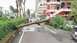 颱風夜溜出門 夜校生撞樹不治