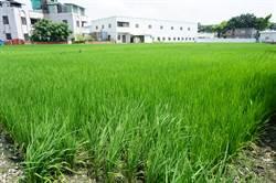 激勵孤獨青農 台中市農會辦共識營