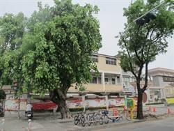 路樹大折損  高市檢討植栽樹種