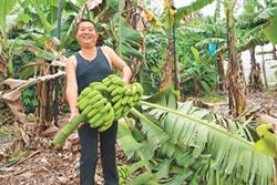 新故鄉願景-香蕉養大的孩子 黃榮炫 青春還鄉再造黃金歲月