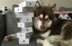 富二代王思聰愛犬有八台iPhone 7
