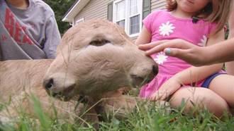 美農場誕生連頭小母牛 主人取名幸運