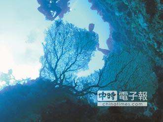 颱風後…蘭嶼大海扇也破相了