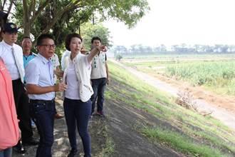 40公頃白甘蔗田倒30公頃未符補助標準?農糧署決定覆勘