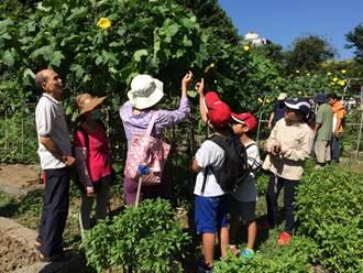 新北打造「可食地景」 栽種蔬菜