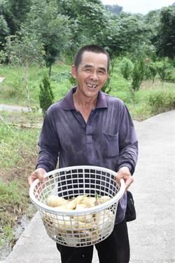 土水師傅黃清泉 巧手種出有機甜筍
