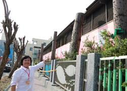 東港高中鋸樹防颱 遭護樹人士怒批不愛地球