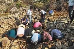 安徽山區修路 挖出大批唐宋幣