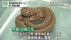 車廂驚見30公分蛇!新幹線列車緊急停駛