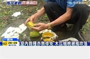 颱風重創水果產地 恐沒便宜水果吃