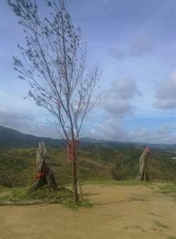 夫樹不敵16級風 滿州夫妻樹遭風災拆散