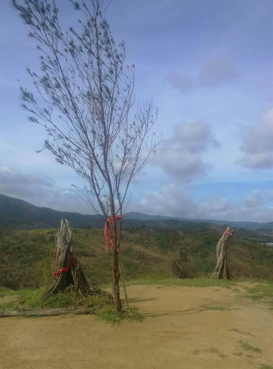 才剛娶20歲嫩妻(中)的夫樹(左)在莫蘭蒂颱風被吹倒,媒人兼滿州鄉代主席莊期文,預計在滿州家園重整後,再嫁妻樹。(永靖社區提供)