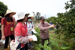 50志工振東柑園體驗有機農業 協助災後重整