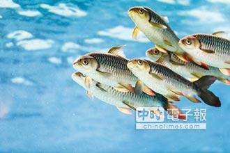 選購魚油 當心劣質品
