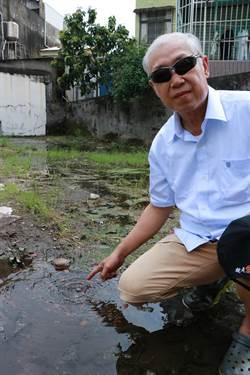 潮州20年後復見地下水湧出 卻險成病媒蚊溫床