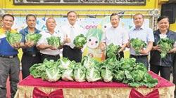 埤頭蔬果藝術節 包心白菜8日讚出來