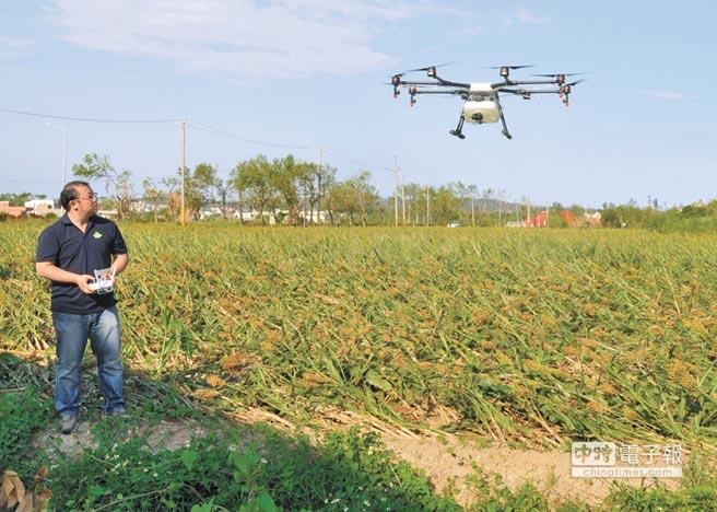 金門首度引進遙控「無人機」空中施肥,替颱風災損的農作「補」一下。除了能提升作業和生產效率外,也可保障農友的健康。(李金生攝)