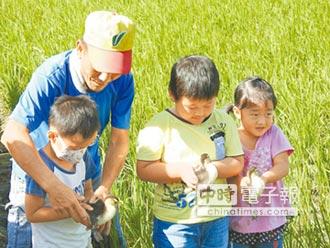 學童下田放養小鴨 體驗鴨間稻