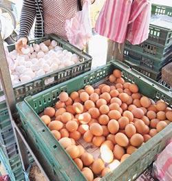 「混蛋」黑心商 土雞蛋會褪色 蛋源、飲料標示有漏洞 議員促納管稽查嚴把關