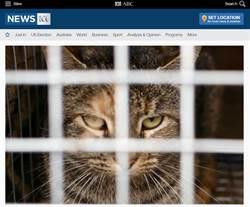 澳洲袋鼠島「滅貓計畫」 誓言15年消滅全島貓