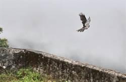 野鳥中途之家設立13年  鳥類救援上千