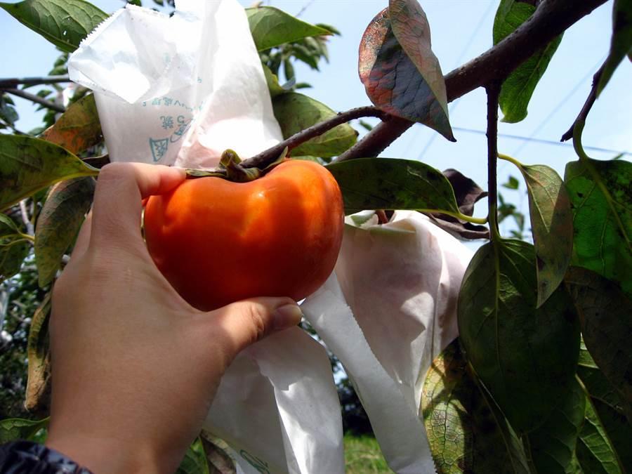 網傳柿子和優酪乳一起吃會中毒,營養師表示這都是謠言。(中時資料照)