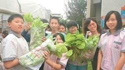 水耕菜1台斤400元 銷港試水溫