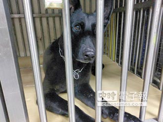 缺檢疫證明 2搜救犬回不了家 動保團體憂將遭撲殺 防檢局:文件齊備就放行
