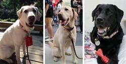 蔡英文明簽同意書 領養3隻「第一家庭狗」