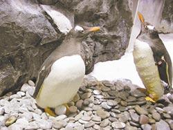 南極永晝搬進海生館 看企鵝孵蛋