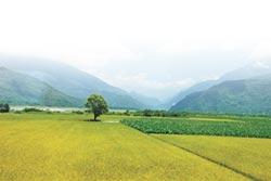 世界糧食日專刊》活化休耕地 轉作新鮮、健康雜糧
