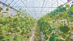 世界糧食日專刊》活化休耕地 推廣作物多樣化