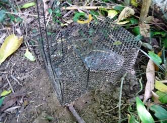 食蛇龜盜捕不斷  嘉義林管處加強查緝
